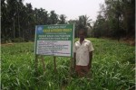 Fodder Grass Cultivation