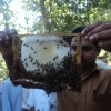 Honey Bee Keeping Trg