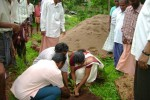 Planting of Tree saplings